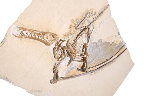 Bild zum Artikel: Urzeit-Quiz zu Dinos und Co.