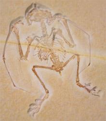 Bild zum Artikel: Führung zu spektakulären Fossilien