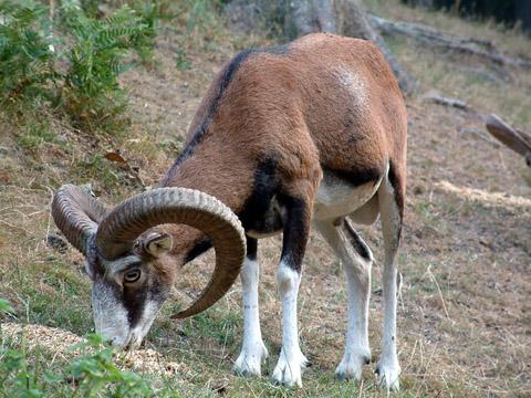 Bild zum Artikel: Informationen zum Förderverein Wildgehege im Internet