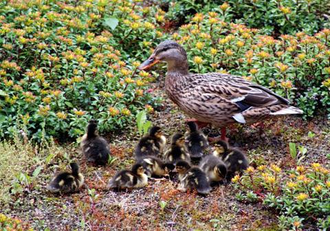 Bild zum Artikel: Kinderstuben der Tierwelt schützen