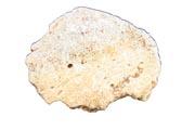 Bild zum Artikel: Sensationelle Neufunde in der Blätterhöhle