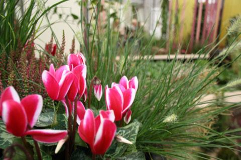 Bild zum Artikel: LGS-Hemer: Neue herbstliche Blumenschau