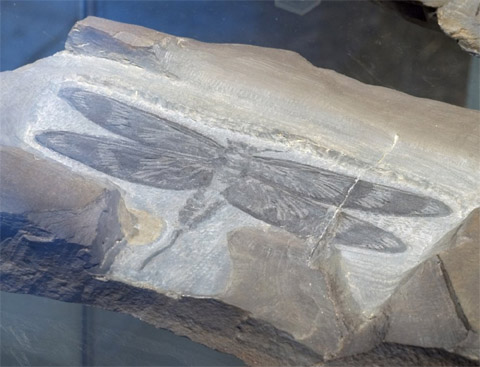 Bild zum Artikel: Spannende Fossilienführung im Wasserschloss Werdringen