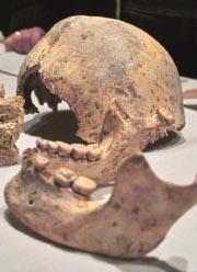 Bild zum Artikel: Saurier, Mammut und dem Urhagener auf der Spur