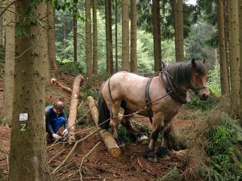 Bild zum Artikel: Wald und Natur im LWL-Freilichtmuseum Hagen